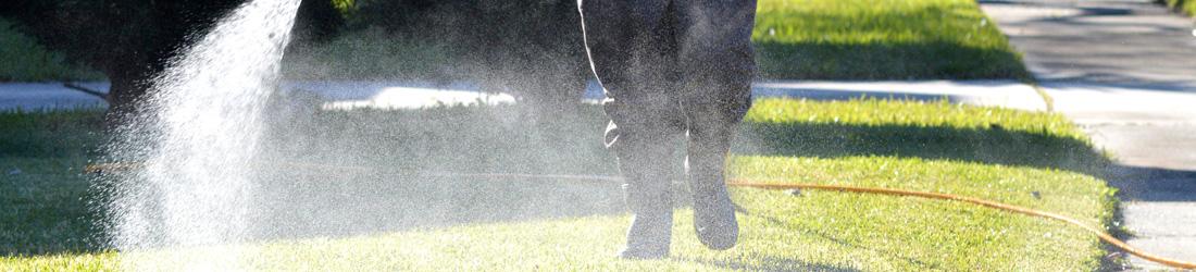grub-spray