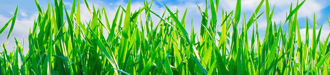 lush-grass