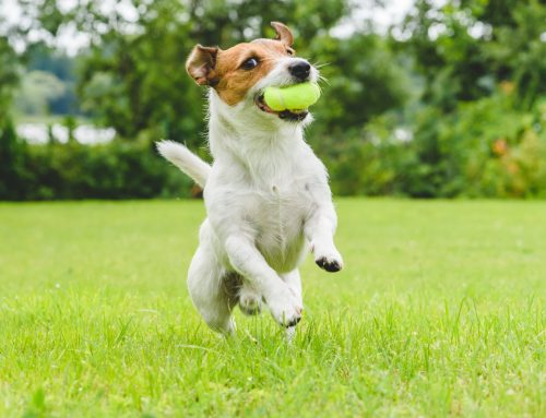Can You Stop Your Pets from Causing Lawn Damage?